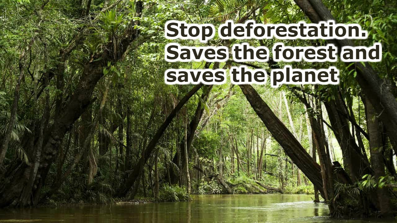 Stop deforestation. Saves the forest and saves the planet.