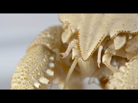 Life at hydrothermal vents | Natural History Museum