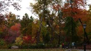 Gambar cover Central Park Fall Foliage
