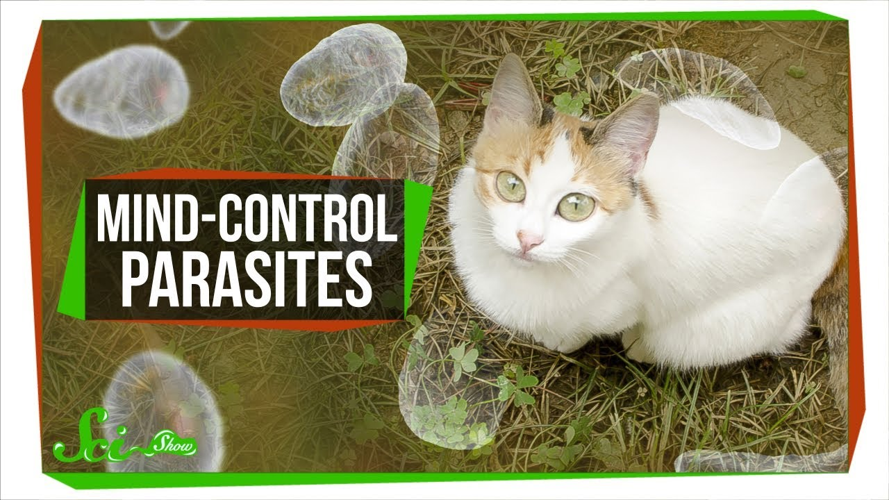 how-mind-controlling-parasites-teach-us-about-brains
