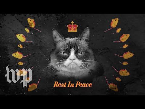 Ginger - Remembering Grumpy Cat