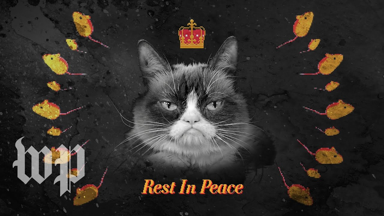 R.I.P. Grumpy Cat Remembering the life and legacy of the most meme,able  feline