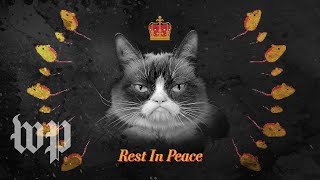 r-i-p-grumpy-cat-remembering-the-life-and-legacy-of-the-most-meme-able-feline