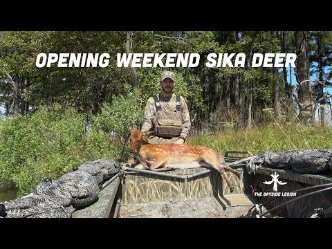 SIKA DEER MARYLAND ARCHERY EASTERN SHORE 2019