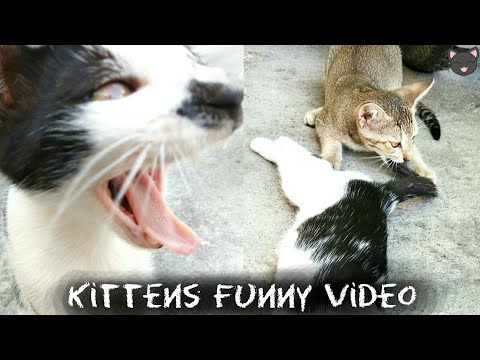 Kittens Funny Video - Cats Funny Video