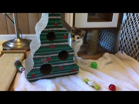 Foster Kittens are Back! Christmas Foster Kitten Room