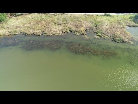 Magothy River Association surveys underwater grasses with drones