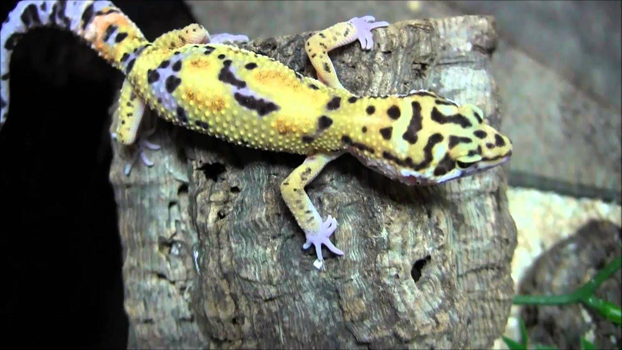 2019 】 🤙 Gecko Images Gecko Gallery Yallingup ⭐ Gecko