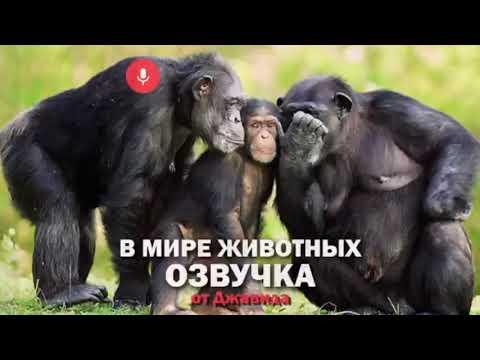 Дочтор Айболит,Смешная Озвучка В мире животных от ДЖАВИДА. 2020