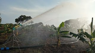 Tractor powered sprinkler irigation system for Bananas and Pasture in Uganda