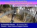 Falcon 30iV  : Flight like Lure pass 2 at Seaside
