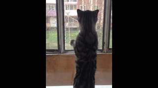 Кот просится на улицу)