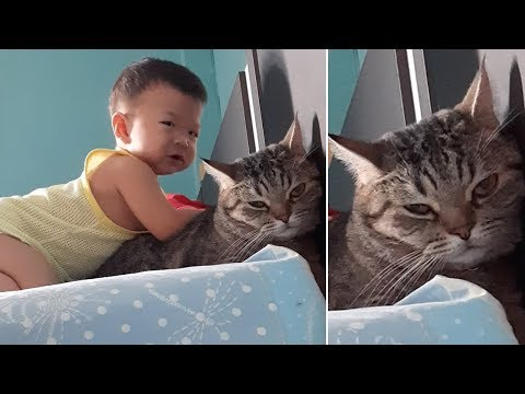 Kind Baby Gives Pet Cat A Massage
