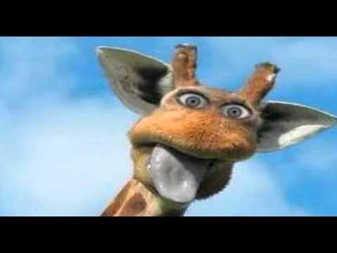 Funny Giraffe Compliation