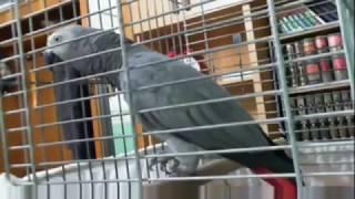 Allah hu akbar say parrot