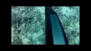Sailing, Spearing Swain Reefs - Short