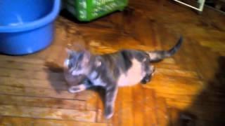 Кот отходит от наркоза