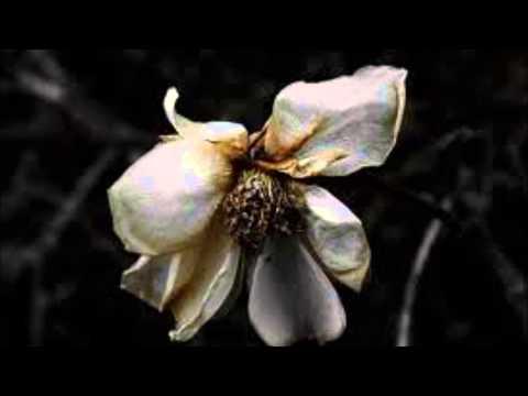 Shriekback Faded Flowers 1985