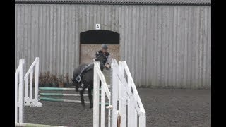 Friesian Horse Apollo saves me from falling
