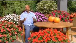 """Cottage Farms Direct SunPatiens """"A Better Value for Your Dollar"""""""