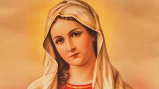 Khi các tông đồ thị nhân của Chúa nói về Mẹ Maria và yêu mến Mẹ Maria