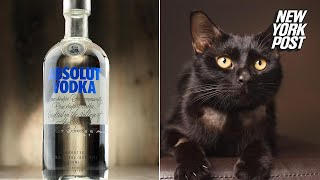 How vodka saved the life of a cat that drank antifreeze | New York Post