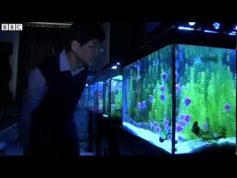 Fluorescent Fish In Taiwan.