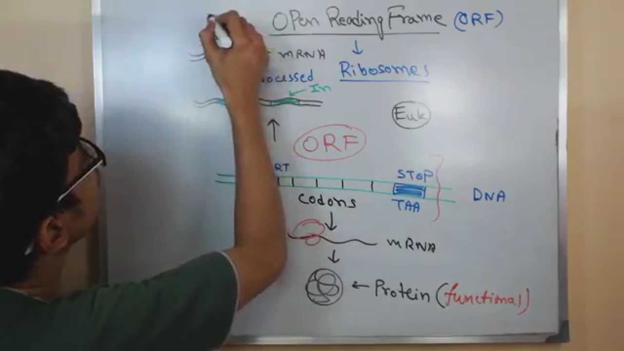 Open reading frame ORF - YouTube