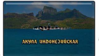 Русская рыбалка 3.99 Акула индонезийская заработок денег и опыта