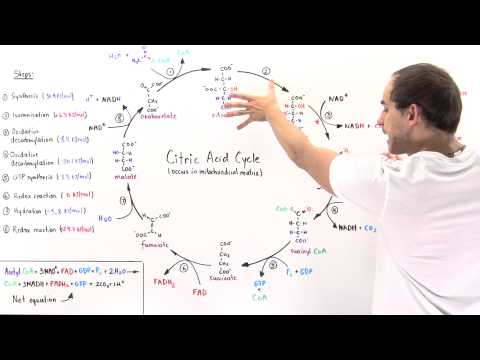 Overview of Citric Acid Cycle