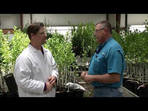 Science Quest: Citrus Farming