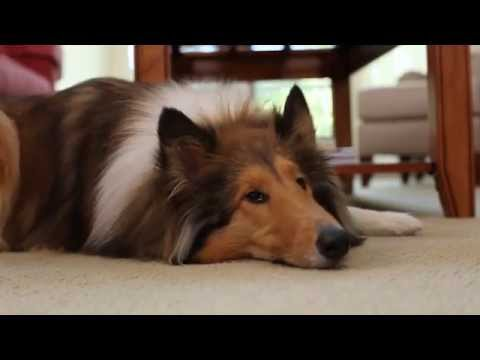 BISSELL® PowerLifter® Pet Vacuum 1309