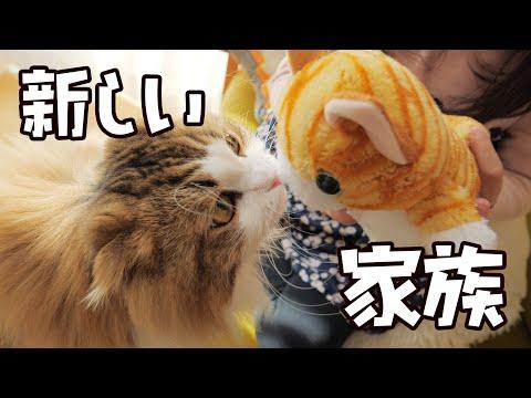 おしゃべり猫に出会った時のもふ猫なりのあたたかい対応はこうでした
