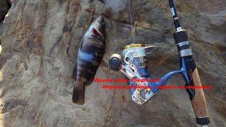 Чёрное море рокфишинг морская рыбалка с берега на спиннинг