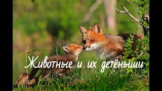 Животные и их детеныши на русском языке. Учим названия животных и их детенышей