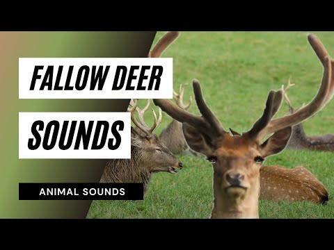 free deer sounds effects