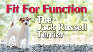 Fit For Function The Jack Russell Terrier