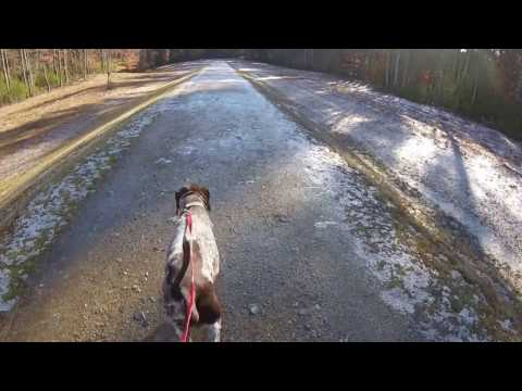 Dog Walk #2 {My point of view}
