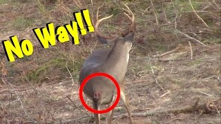 Buck Comes Back After Being Shot By Bow Hunter!!