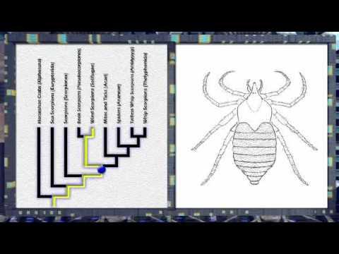 Morphing Arachnids  Using Phylogenies for Time Travel