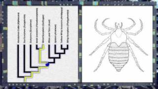 Morphing Arachnids  Using Phylogenies for Time Travel