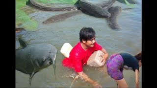 Wow!Khmer-Net Fishing by hand - How To Catch  Fish at battambang in cambodia (part016)