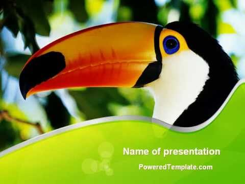 Southern mexico toucan powerpoint template by poweredtemplate southern mexico toucan powerpoint template by poweredtemplate youtube toneelgroepblik Gallery