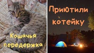 Передержка кошки/Купаем котейку