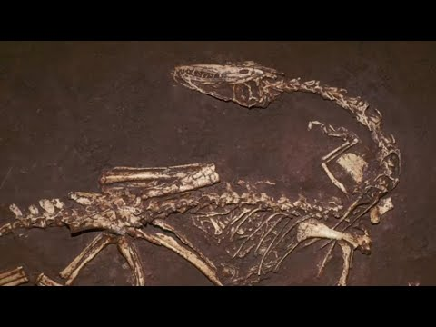 10 SURPRISING Recent Discoveries About Dinosaurs!