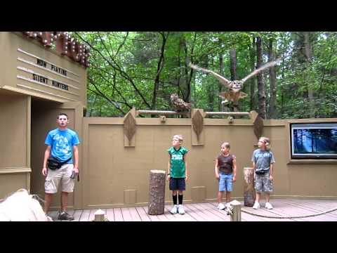 Carolina Raptor Center Silent Hunters