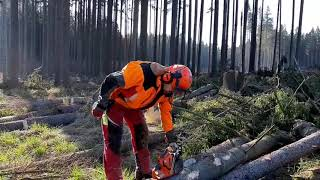 SUPER WORK LUMBERJACK with chainsaw Husqvarna 560XP