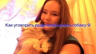 Как уговорить родителей купить собаку?(Создано с помощью VideoFX Live: http://VideoFXLive.com/FREE JOIN VSP GROUP PARTNER PROGRAM: https://youpartnerwsp.com/ru/join?96210., 2016-01-18T12:02:21.000Z)