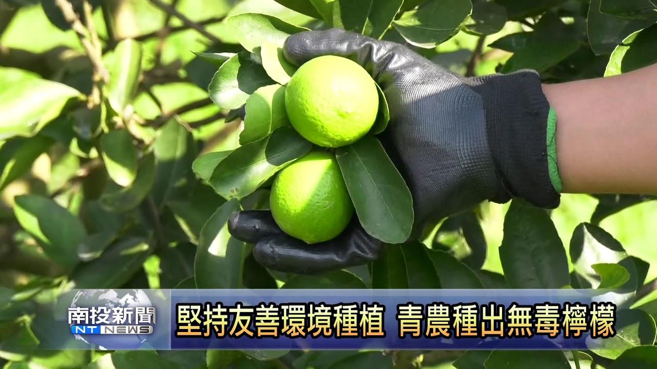 南投新聞 堅持友善環境種植 青農種出無毒檸檬 - YouTube