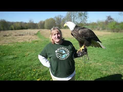 Francie Krawcke Talks About A Bald Eagle At Michigan Avian Experience